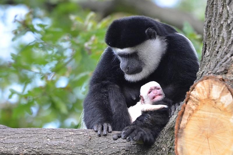 Novinky V Zoo Dve Nova Mladata Pro Prvnacky 1 Zari Vstup Za
